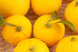 冬至の「カボチャ」「柚子(ゆず)湯」は快眠の知恵