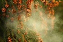 花粉による肌荒れ、約7割が「対策をしていない」と回答- 理由は?
