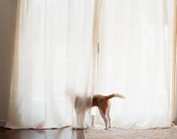 意外と汚れているらしいけど……カーテンの洗濯頻度ってどれくらい?