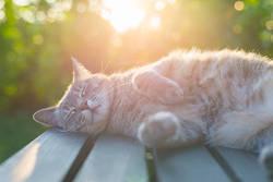 春は寝ても寝ても眠い? 春の眠気の原因と対処法