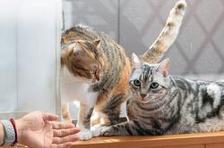 ペット共生マンションって実際どうなの?「Wiz Box 01」の住人に話を聞いてみた