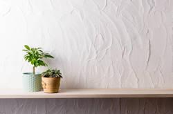 初心者でも育てやすい!お手入れが簡単な観葉植物5選