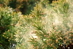 19年シーズンに試したい花粉対策、4位は対策費用が0円の……