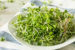ダイエットを成功させる簡単レシピ - 「豆苗ナムル」でストレスも解消