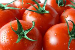 【ダイエットレシピまとめ】150kcal以下!野菜の代表格「トマト」を使ったおかず