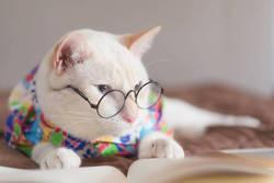 ストレスに負けない働くオトナのメンタルケア  第4回 あなたを変える「心の眼鏡」の外し方