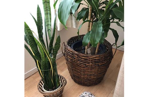 お部屋に観葉植物を取り入れてみよう。小さな自然があなたの空間に実現する