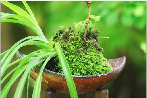 苔玉は緑が少ない季節にもってこいのアイテムだ!