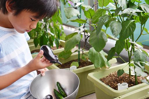 家庭菜園も立派な自由研究のテーマに