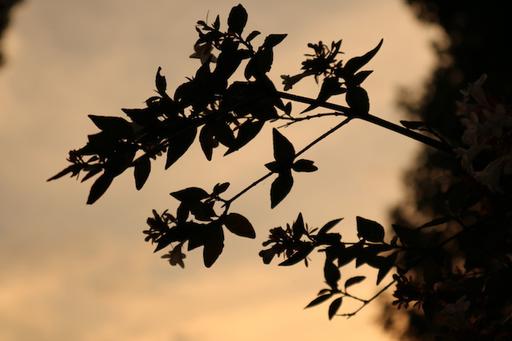 カメラマン堀さんの写真(焦点距離:45、f値:6.3、露出時間:1/125、ISO感度:ISO100)