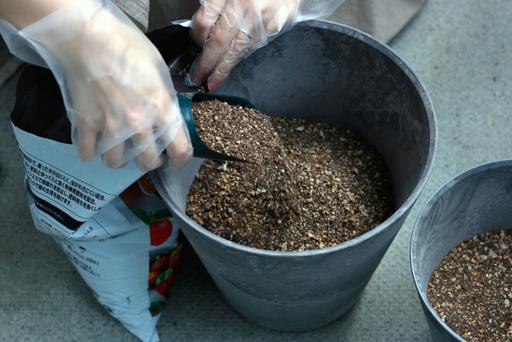 まずは鉢の半分くらいまで土を入れる