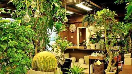 コロナで爆売れする観葉植物。始めるならどこからがいいでしょうか?(撮影:梅谷秀司)