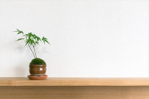 インテリアとしてもおしゃれなミニ盆栽
