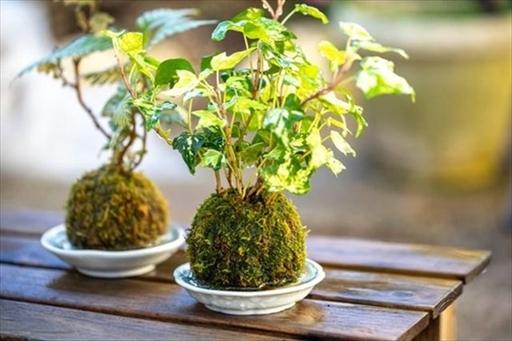 自分に合ったミニ盆栽をみつけよう
