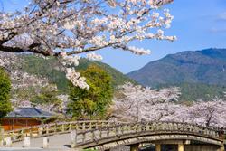 恋愛成就の神社巡り。春爛漫の京都へ良縁を結びに出かけませんか?