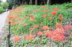 森林インストラクターに聞く!道端で見つけたい、季節の花~秋編~