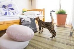 一人暮らしでも大丈夫!おすすめ小動物ペット3選と一緒に暮らす方法