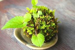 丸くてかわいい苔玉をお部屋のインテリアに!苔玉の作り方や育て方のコツ