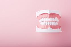 お口と歯の構造