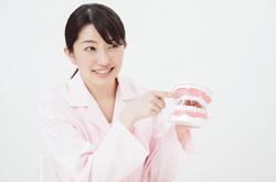 乳歯と永久歯の本数