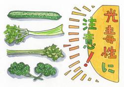 【特集/今やるべき紫外線対策】とればいいわけじゃない、ビタミンCの真実