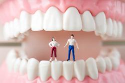 お口と歯のはたらき
