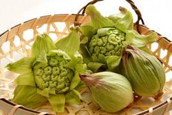 【春の訪れ】旬野菜「ふきのとう」の栄養効果とおすすめの食べ方♪