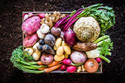 【管理栄養士が監修】100kcal以下!野菜たっぷり常備菜レシピ5選