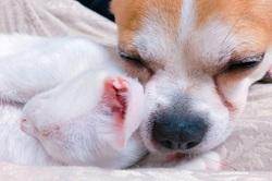 ペットの健康も考えよう!犬も猫も一緒にリラックス♪おすすめのケアグッズ6選