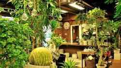 コロナで爆売れ中「観葉植物」を本気で選ぶコツ|「初心者でも簡単」育て方をプロに聞いてみた