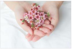 部屋に花を飾ろう! 室内で花を長持ちさせる方法とは?
