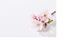 部屋を春色に飾る、かわいい桜モチーフのインテリア・雑貨アイテム10選
