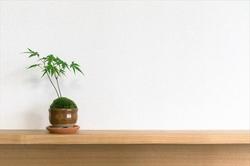 ミニ盆栽の始め方!盆栽の基本や初心者におすすめな商品を紹介