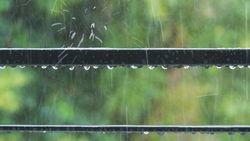 日本人が無駄にしている「雨水」は飲めるのか 大量の雨水を利用しないなんてもったいない