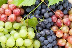 【旬の果物】ぶどうの栄養と管理栄養士考案レシピ5選