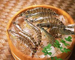 【高級食材の魅力が知りたい!】くるまえびの栄養とおすすめレシピ