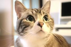 初めて猫を飼うときに必要なもの7選!アイテムの事前準備で快適なペット生活を